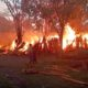 Gudang Kayu dan Mebel di Banyuwangi Terbakar